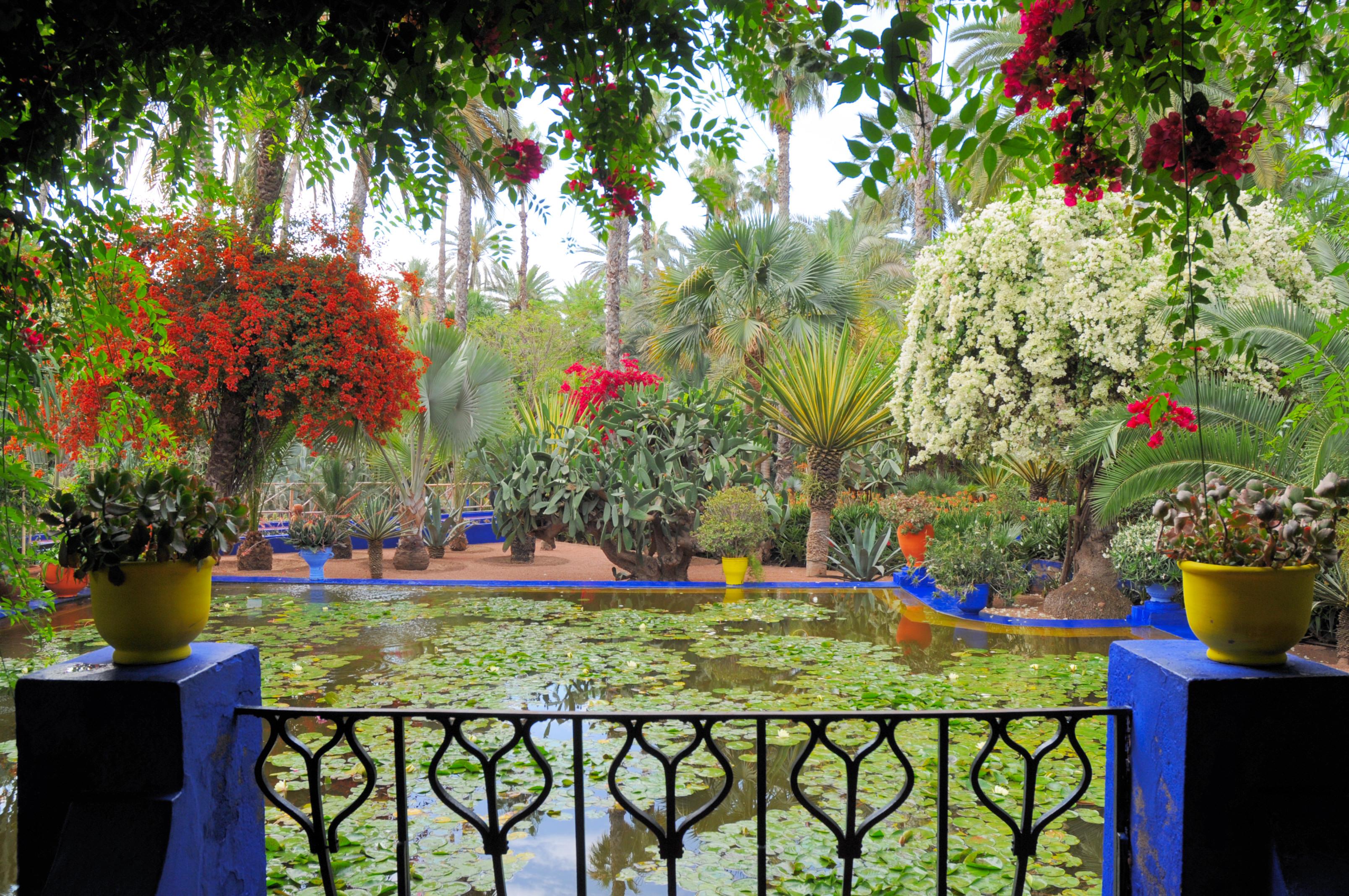 Le_jardin_des_majorelle_14